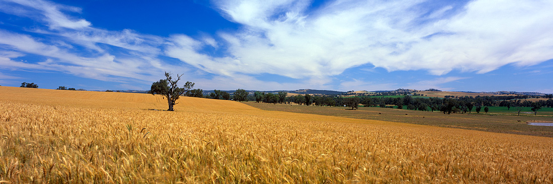 The Australian Country Side is