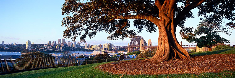 Observatory hill landscape photos sydney harbour bridge for Landscaping sydney