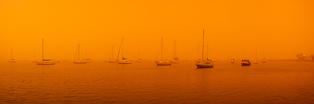 Dust Storm, Koolewong