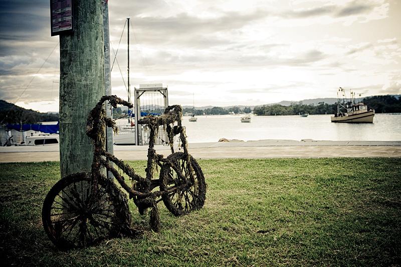 Seaweed Bike