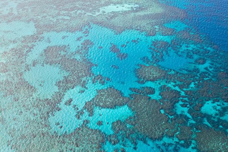 Briggs Reef
