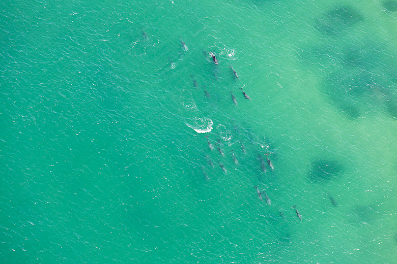 Dolphin Pod, Merewether
