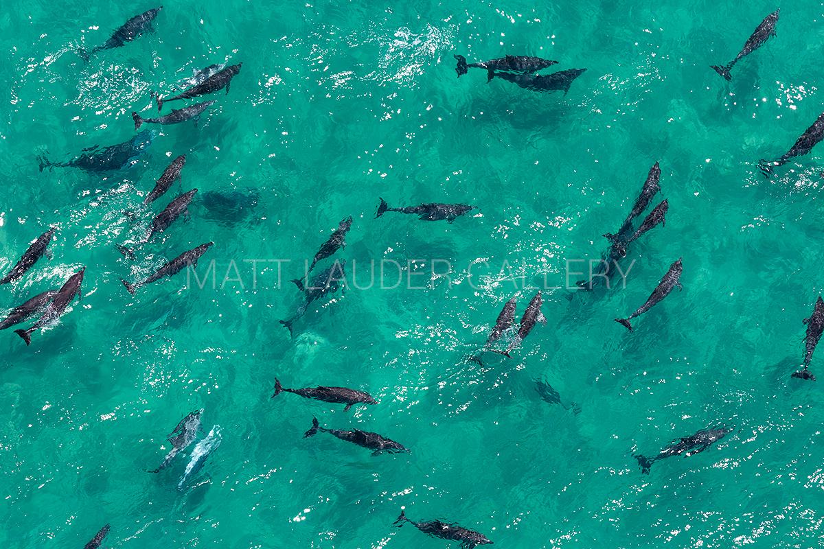 Byron Bay Dolphin Photos