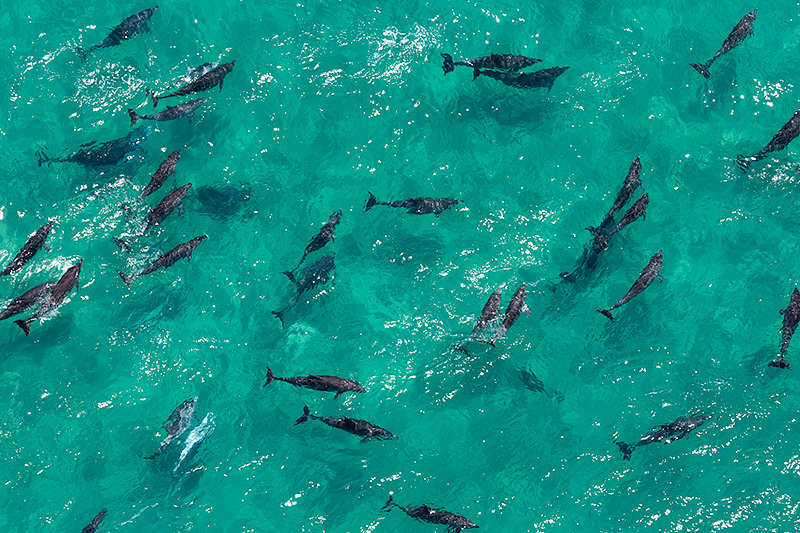 Byron bay Dolphin Pictures
