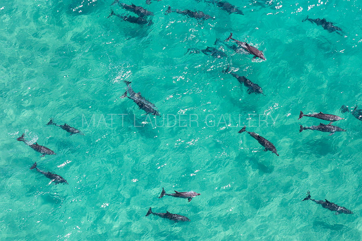 Dolpin Pod Byron Bay Aerial Photos